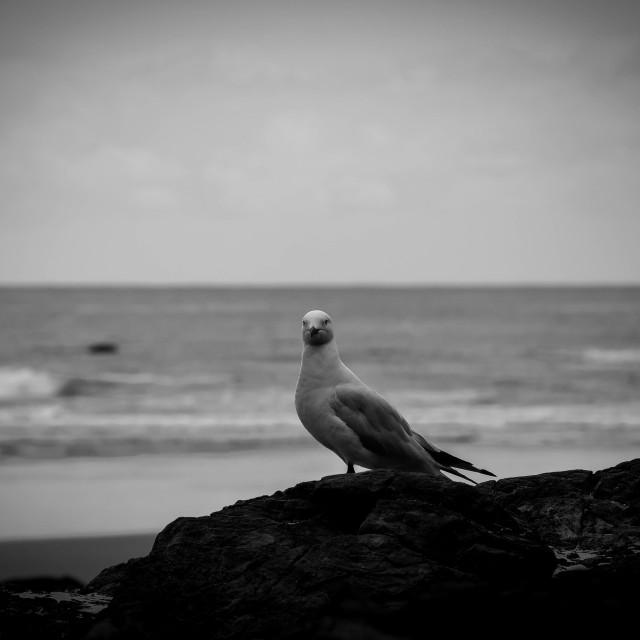 """pondering pigeon."" stock image"