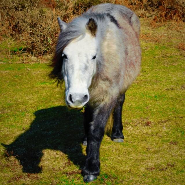 """""""Wild horse"""" stock image"""