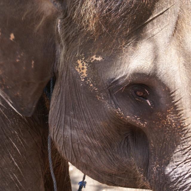 """Elephant in Bali"" stock image"