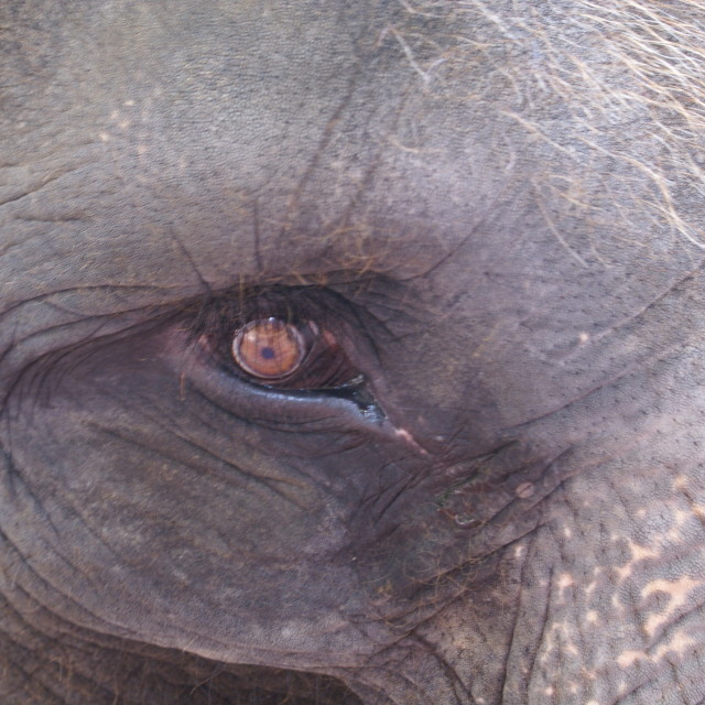 """Elephant up close in Bali"" stock image"