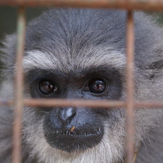 """""""Monkey in Bali Zoo"""" stock image"""