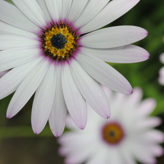 """summer flowers"" stock image"