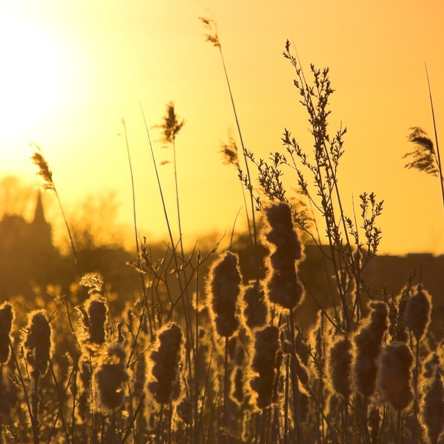 """""""Sunset in Holland"""" stock image"""