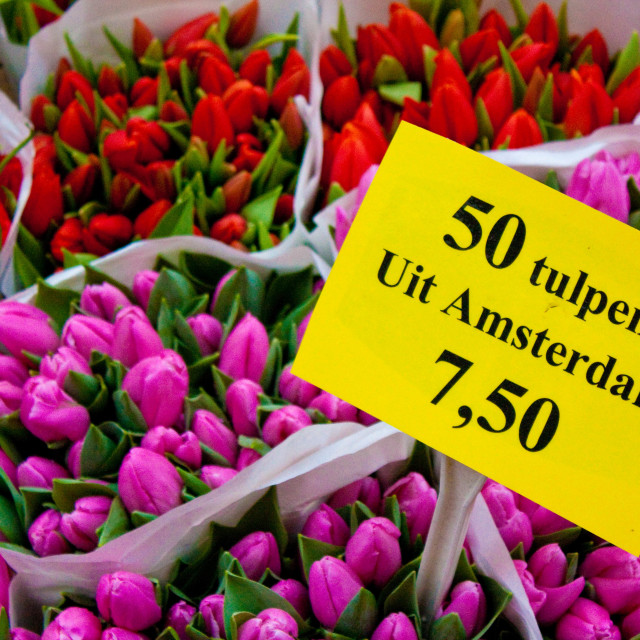 """tulips from Amsterdam"" stock image"