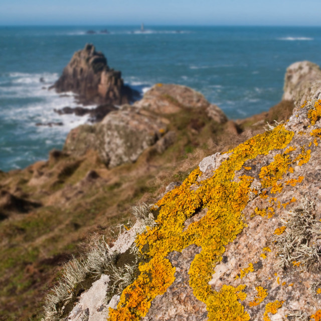 """Lichen at Land's End"" stock image"