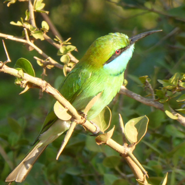 """Sri Lanka - bird @ Yala national park"" stock image"