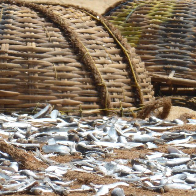 """Sri Lanka - Fish market @Negombo"" stock image"