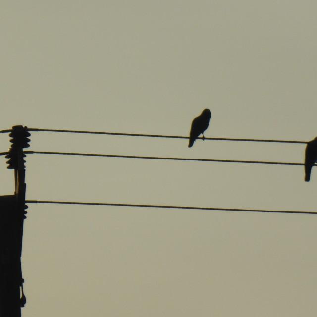"""""""Sri Lanka - birds@Mirissa"""" stock image"""