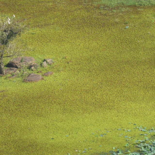 """Sri Lanka - view from Sigiriya rock"" stock image"