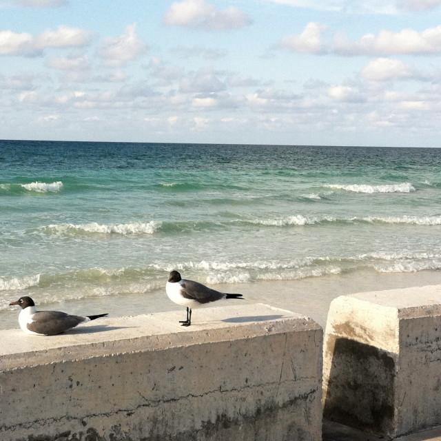 """Bahamas birds"" stock image"