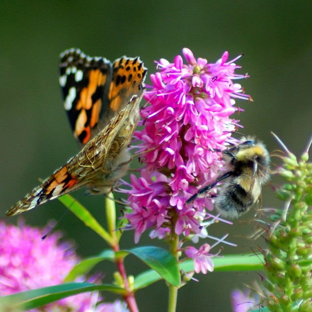 """""""Butterfly and bee"""" stock image"""