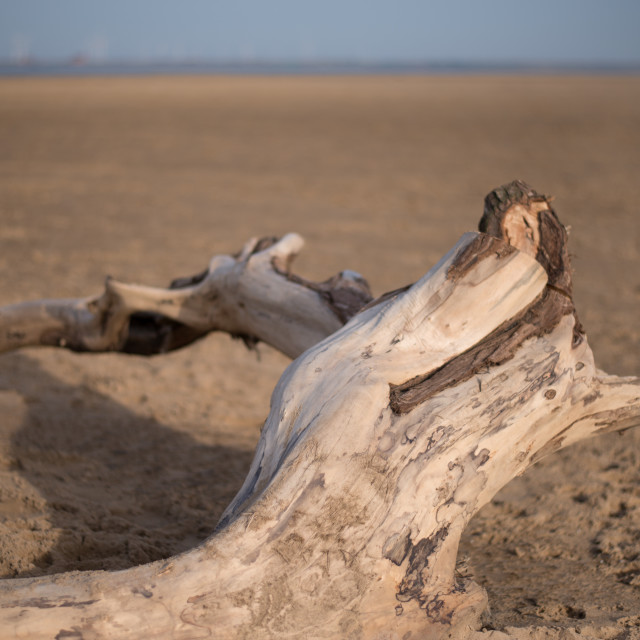 """Driftwood (wide)"" stock image"