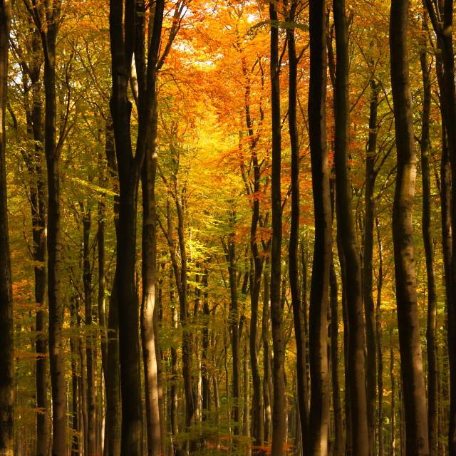 """Autumn3"" stock image"