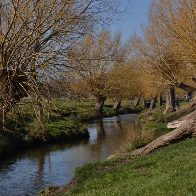 """Richmond Park Stream"" stock image"