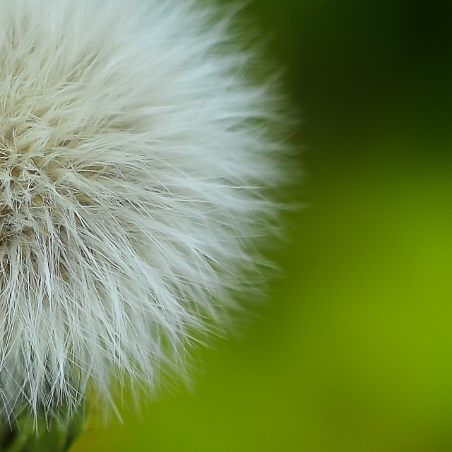"""Fluffy Fairy Wishes Ball"" stock image"