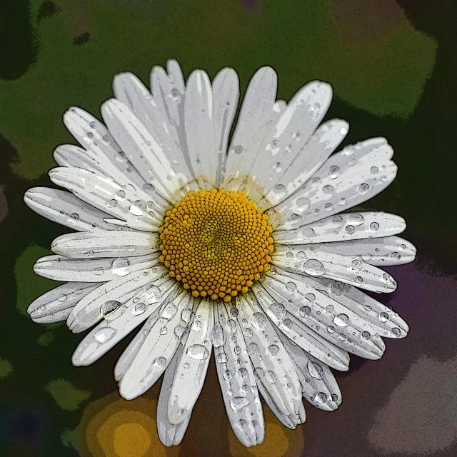 """""""Dear Daisy"""" stock image"""