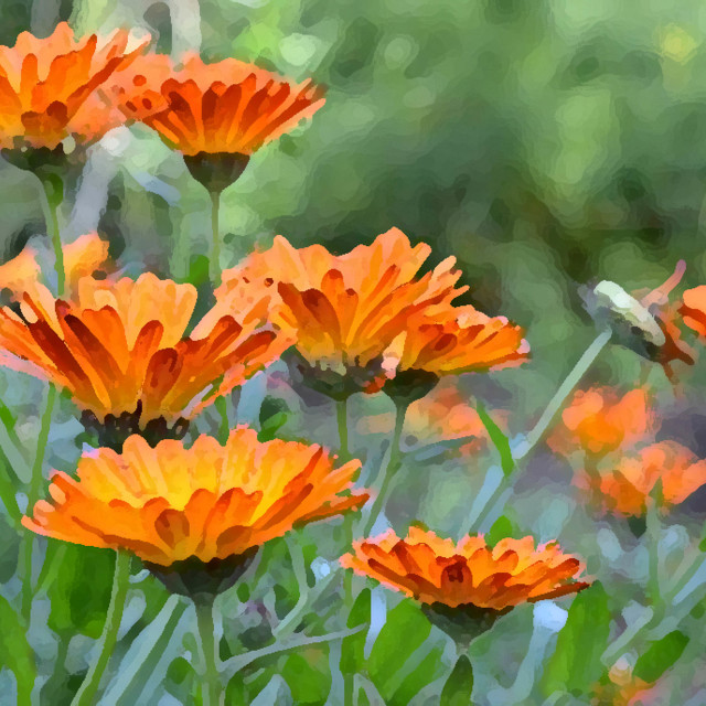 """Orange Flowers"" stock image"