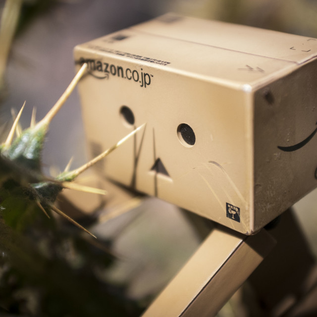 """Danbo on a Thistle"" stock image"