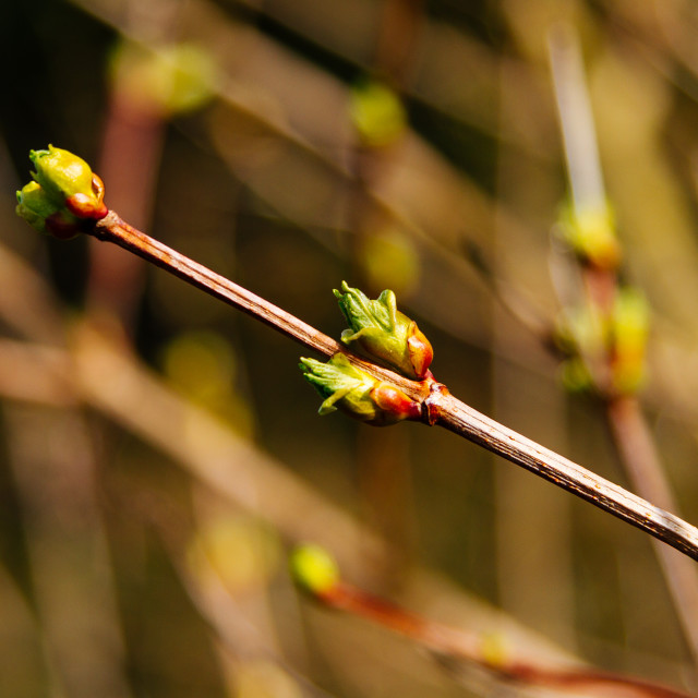 """Flower buds"" stock image"