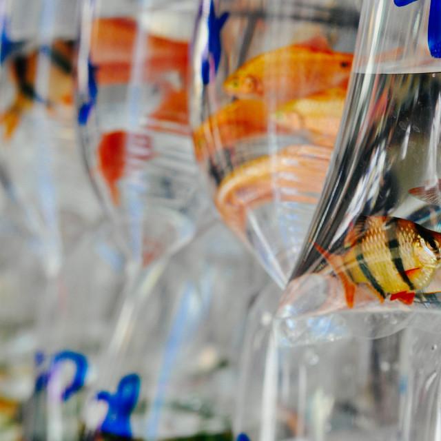 """""""Goldfish Market"""" stock image"""