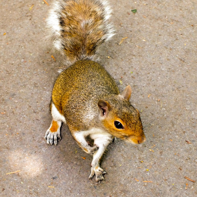 """""""Nuts, i need nuts!"""" stock image"""