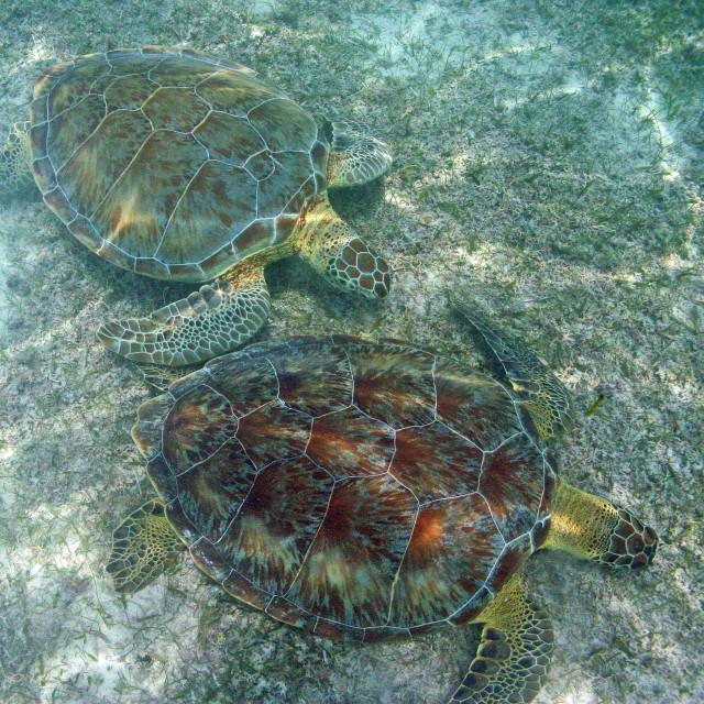 """Turtles"" stock image"