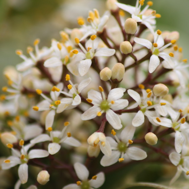 """White spring flowers"" stock image"