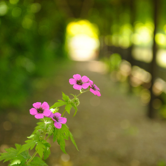 """Chenies Manor House Gardens"" stock image"