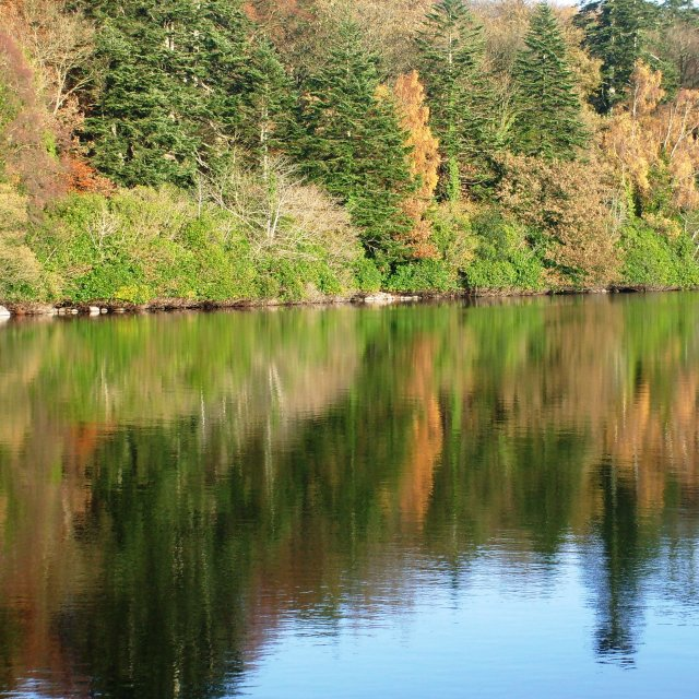 """Reflections on Castlewellan lake"" stock image"