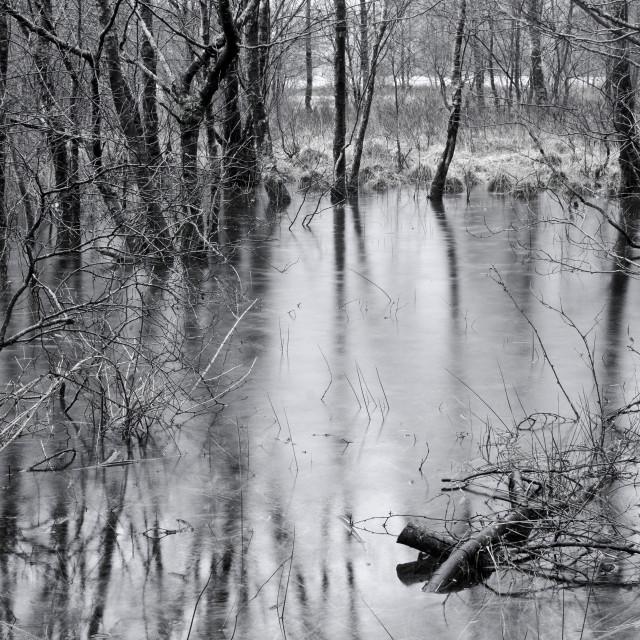 """""""Wetland"""" stock image"""