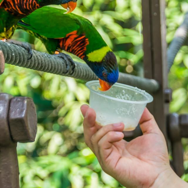 """feeding birds"" stock image"