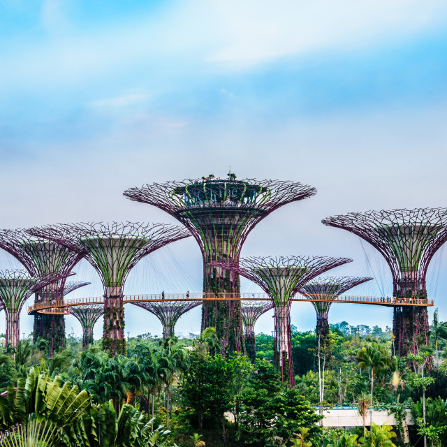 """garden by the bay"" stock image"