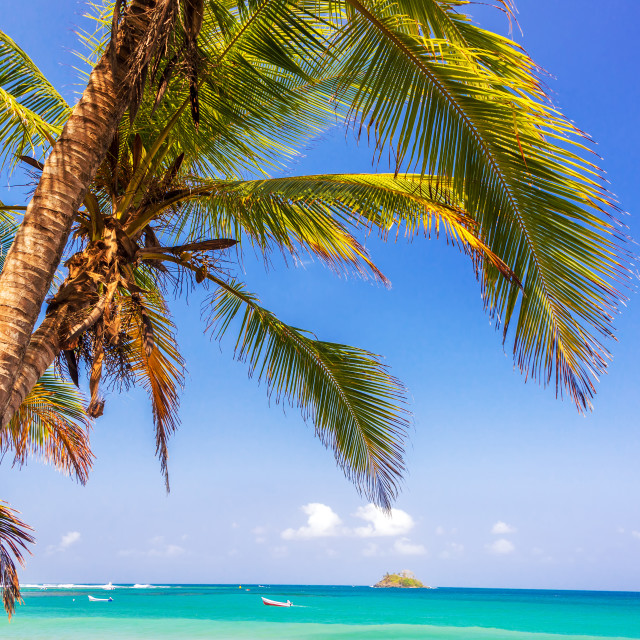 """Palm Tree and Caribbean"" stock image"