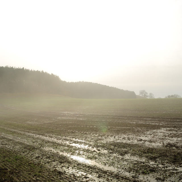 """""""Farming,Flooded Field."""" stock image"""