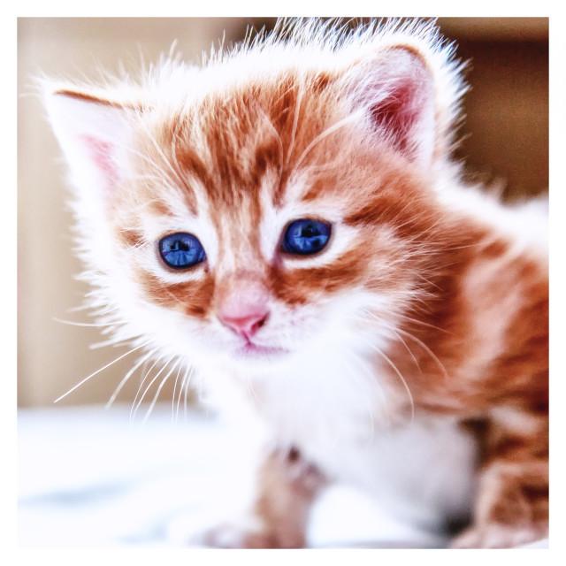 """Kitty"" stock image"