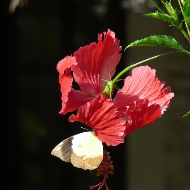 """""""Kenyan Butterfly-Heaven"""" stock image"""
