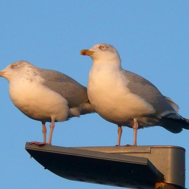 """Seagull Heaven"" stock image"