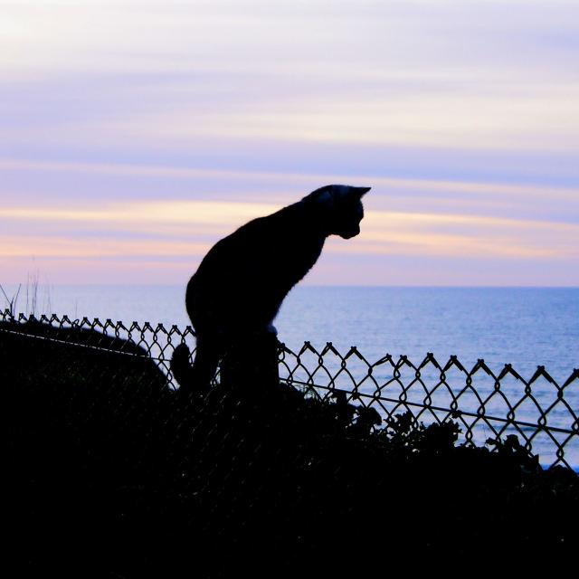 """'Cornish Cat'"" stock image"