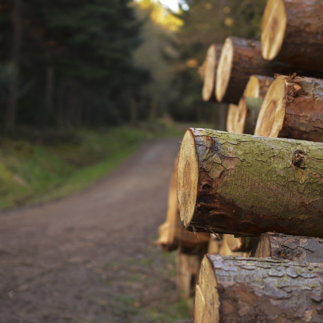 """Forest Logs"" stock image"