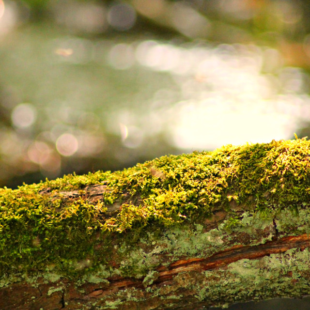 """""""Moss on a branch"""" stock image"""