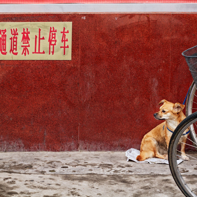 """Red wall dog"" stock image"