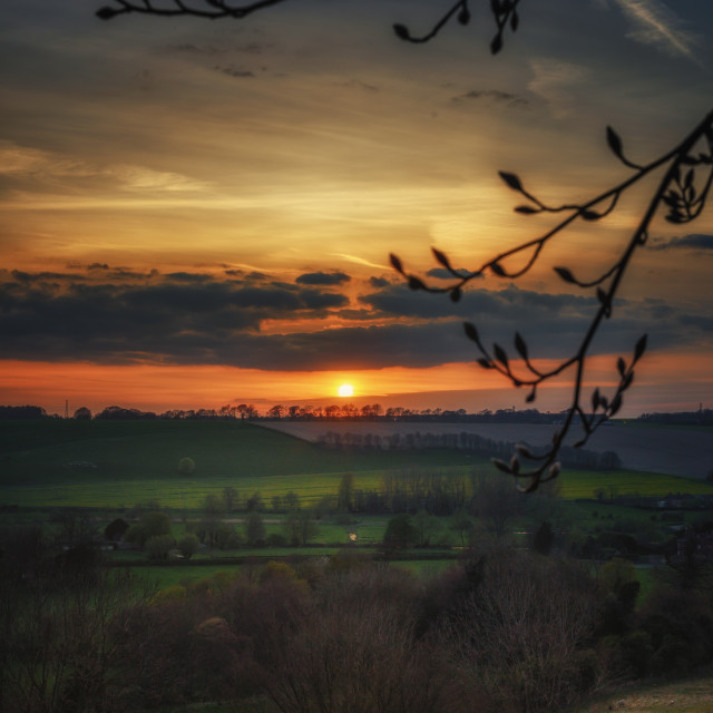 """""""Sunset From Under A Tree"""" stock image"""