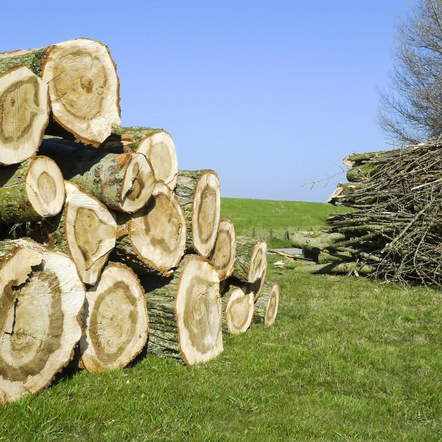 """Chopped logs"" stock image"