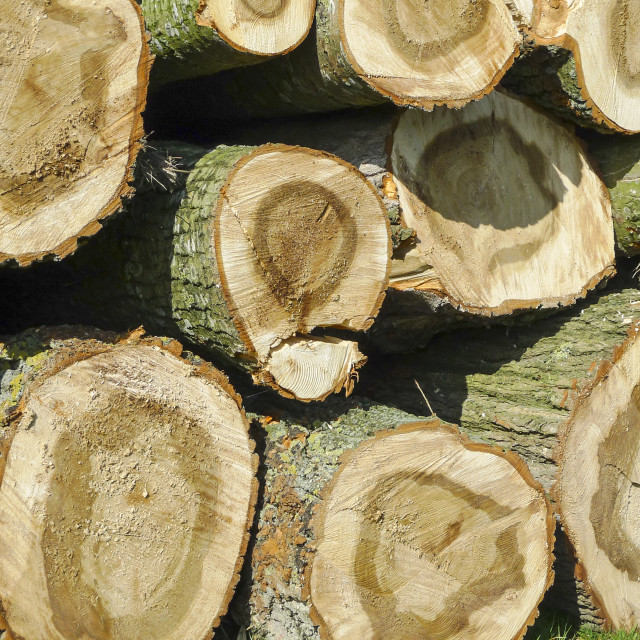 """""""Background of felled trees"""" stock image"""