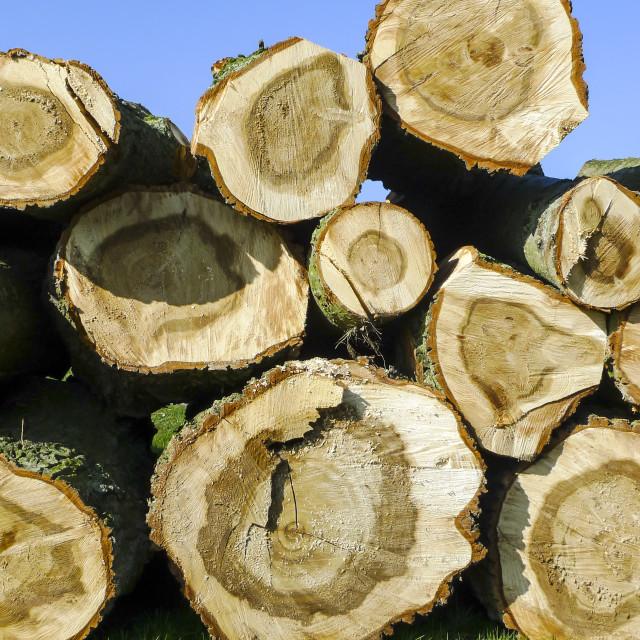 """Felled trees"" stock image"