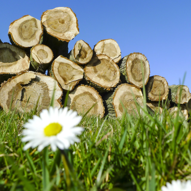 """Felled trees stacked"" stock image"
