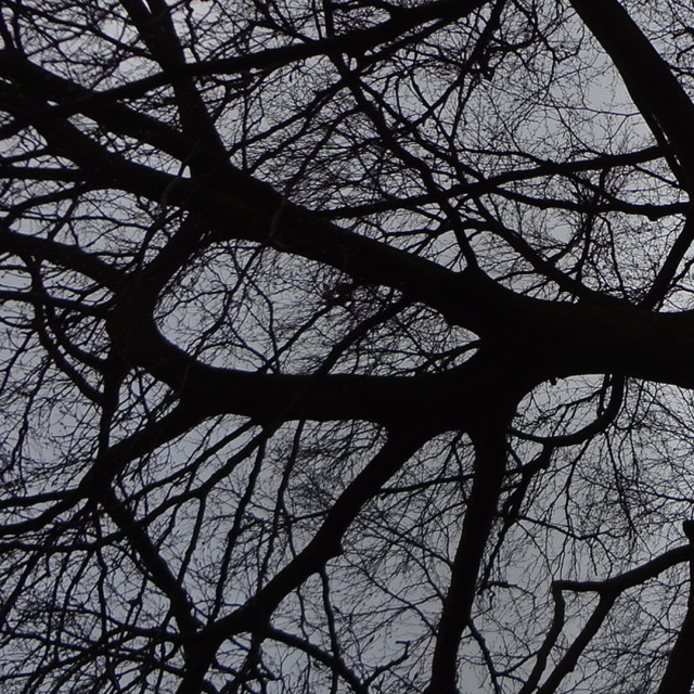 """tree branches"" stock image"
