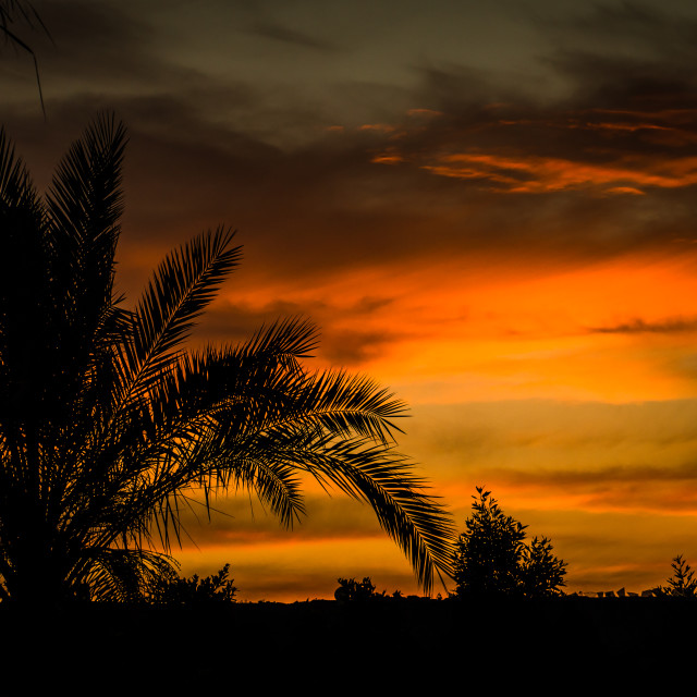 """Palm Tree Silhouette 2"" stock image"