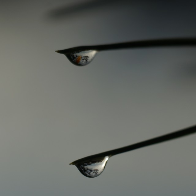 """Double water droplet"" stock image"