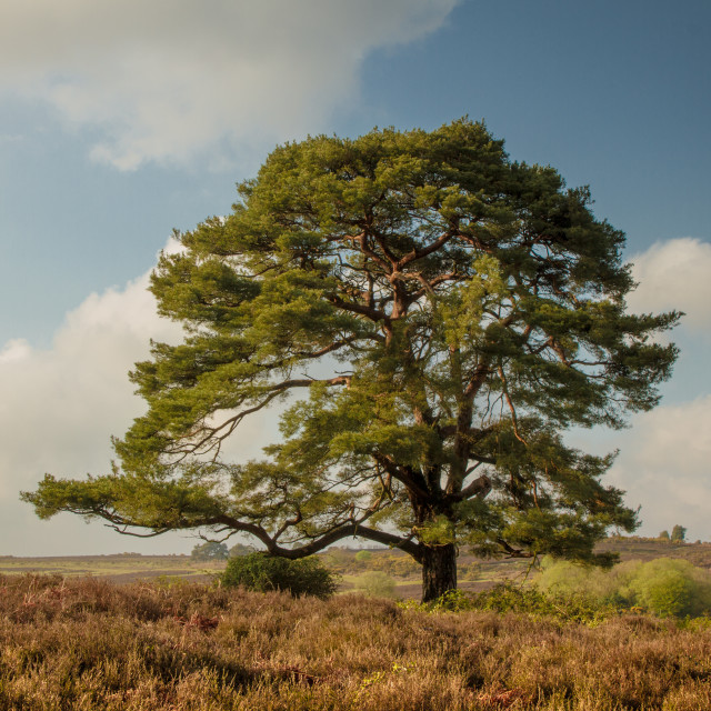 """New Forest landscape"" stock image"